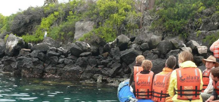 Galapagos_family_4_2016