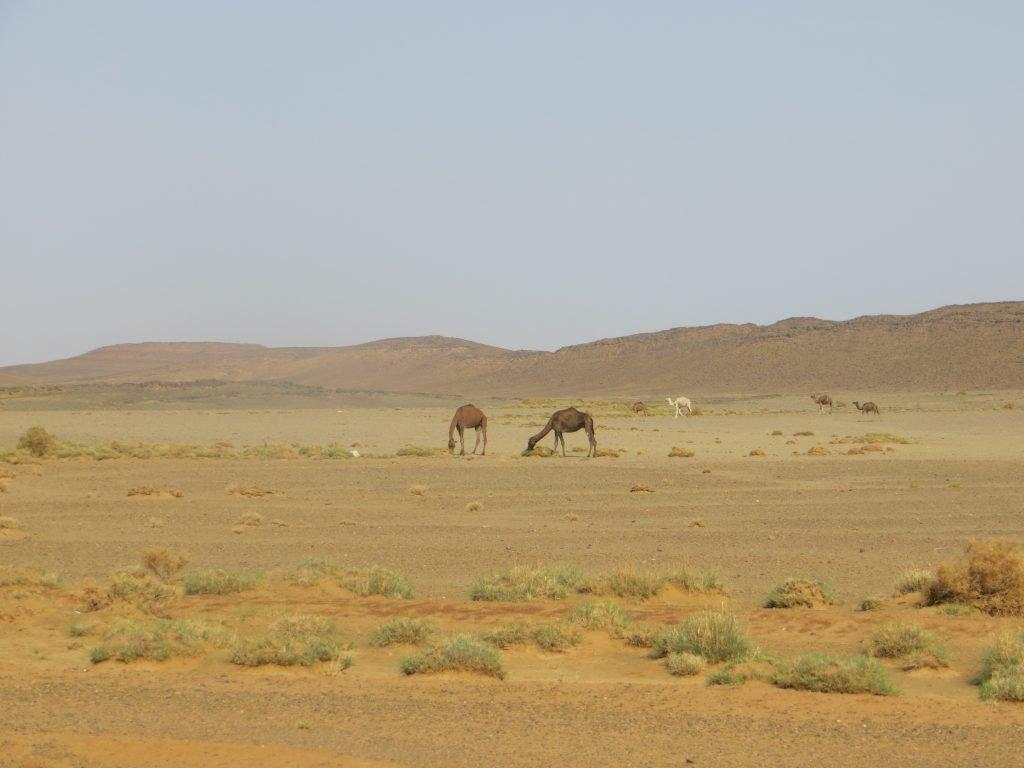 Marokko_2_2015