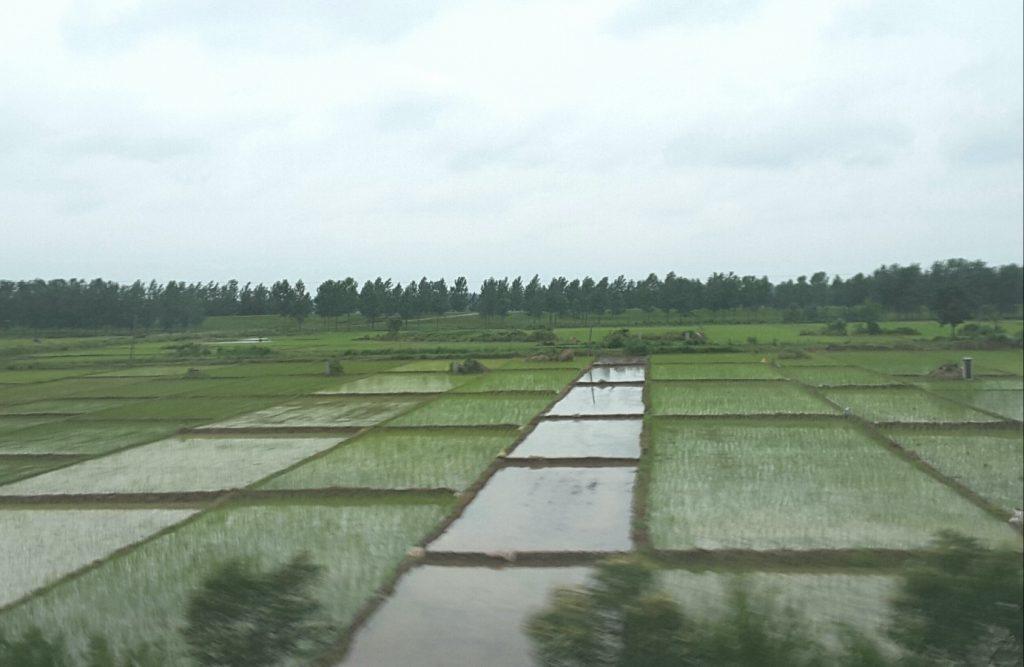 Reis- und Lotusfelder (Horst Reitz und Berend Veddeler)