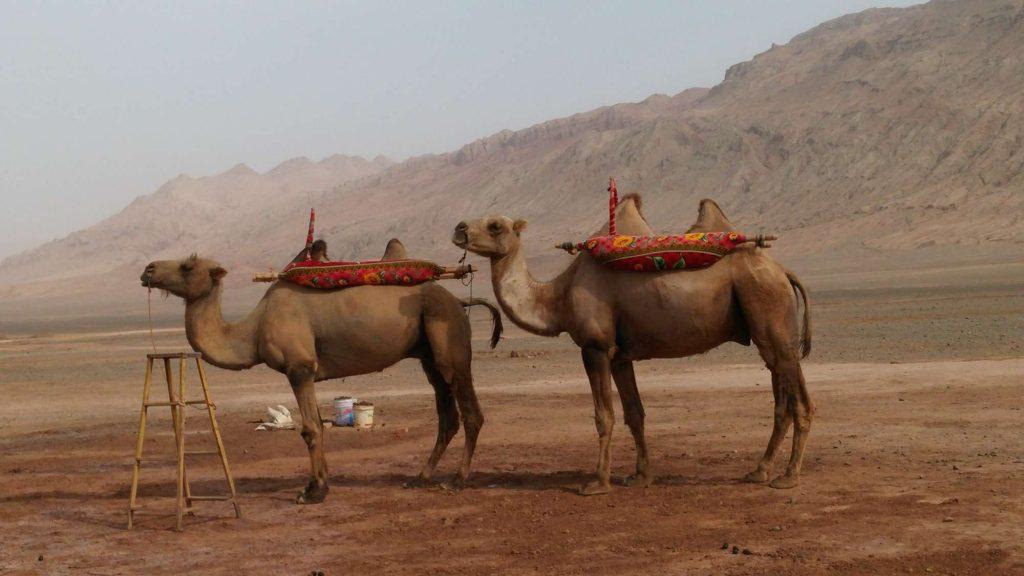 Kamele vor flammenden Bergen (Angelika Holtz)
