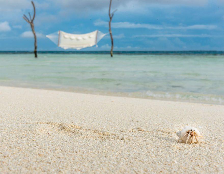 Kleine Krabbe am Strand der Malediven