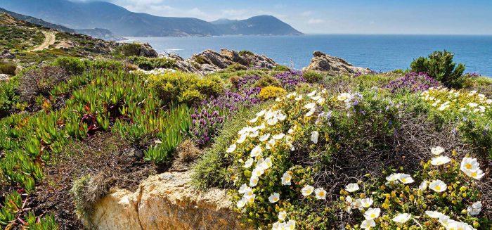Berglandschaft auf Korsika