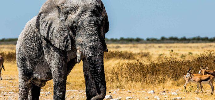 aufmacher-namibia-4-c-freiraum-fotografie