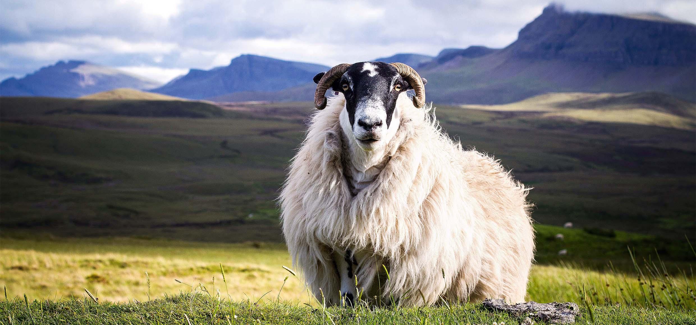 KF_Schottland_324_3