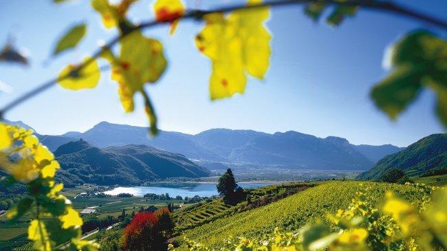 Weinbau am Kalterer See