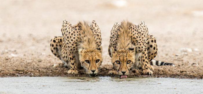 AFR_595_Botswana_03_Aufmacher_S (John CeulemansiStockphoto)