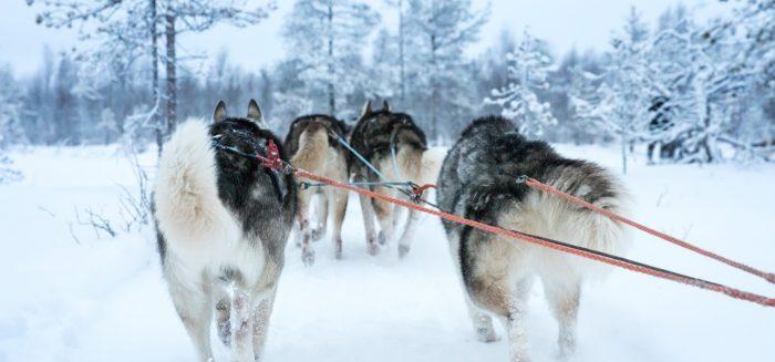 EU_081_Lappland_Winter_01_Aufmacher_S