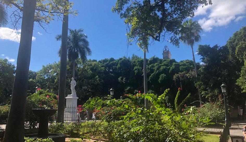 Botanische natürliche Papaya-Schlankheitspillen