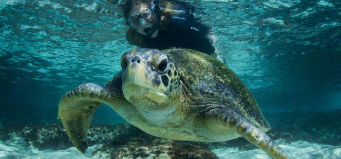 1_117_Sea Turtle-Santiago Island,Sulivan Bay_aufmacher