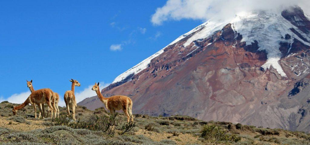 1_166_Humboldt Ecuador_ reisegrafAdobe Stock.jpeg