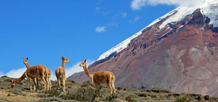 Aufmacher_166_Humboldt Ecuador_ reisegrafAdobe Stock.jpeg