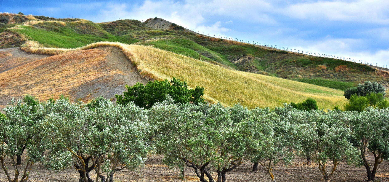 Olivenbäume_AdobeStock_207678187_monticellllo