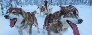 081_01 Aufmacher_Inari_Sled dogs_ugur-arpaci-_UjPlnYdSqU-unsplash