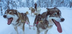 081_01 Inari_Sled dogs_ugur-arpaci-_UjPlnYdSqU-unsplash