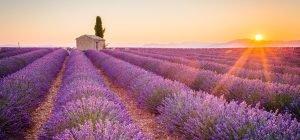1_139_Provence_Print+Online_iStock-490129602(c)ronnybas
