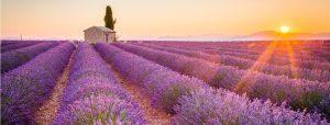 Aufmacher_139_Provence_Print+Online_iStock-490129602(c)ronnybas
